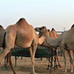 Best-cheap-Abu-Dhabi-Tour-Operators