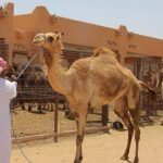 al-ain-city-tourist-places-from-abu-dhabi