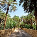al-ain-oasis-from-abu-dhabi