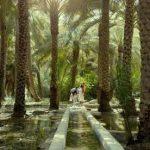 al-ain-oasis-tri-from-abu-dhabi