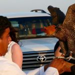 private-overnight-Desert-safari-price -Deals-al-ain